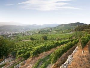 italie vins bolla valpolicella