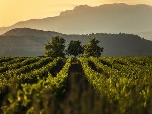 Vignoble de la Rioja
