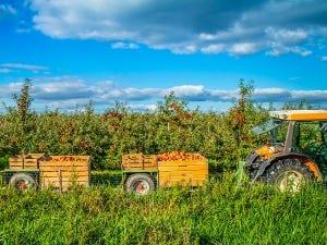 Tracteur dans un verger de pommes