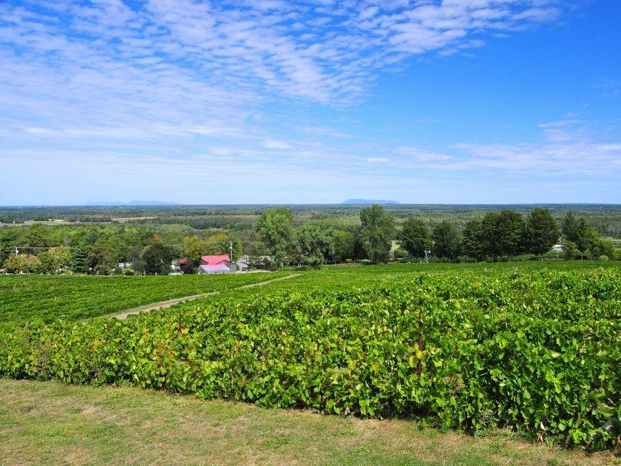 Vignoble au Québec