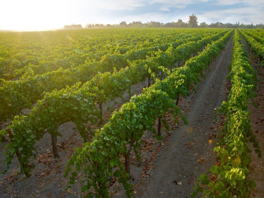 california, wine, gallo