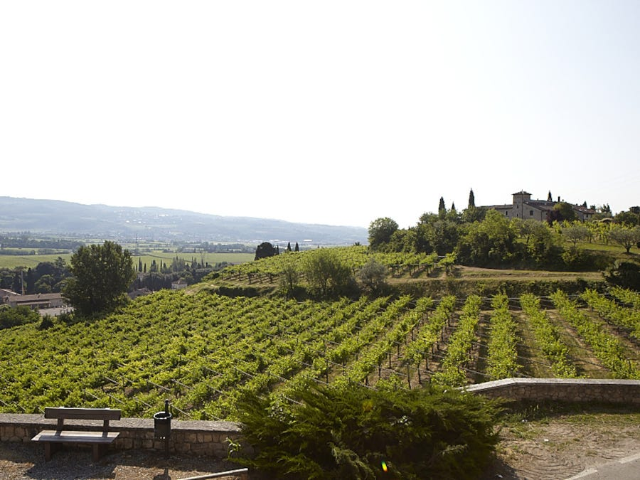 gerardo cesari, italian wine