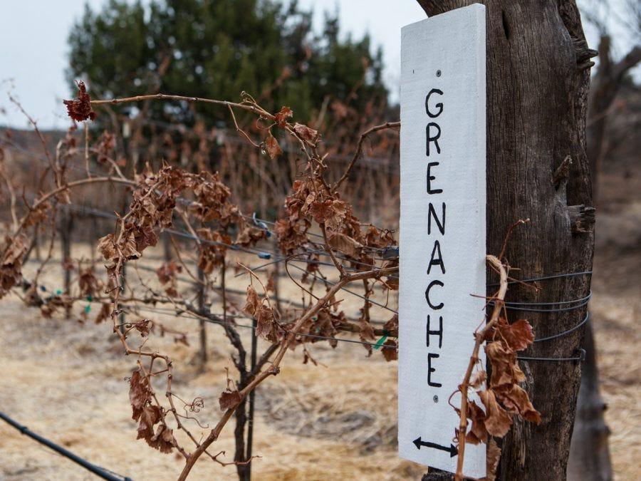 Pieds de vigne de grenache en automne