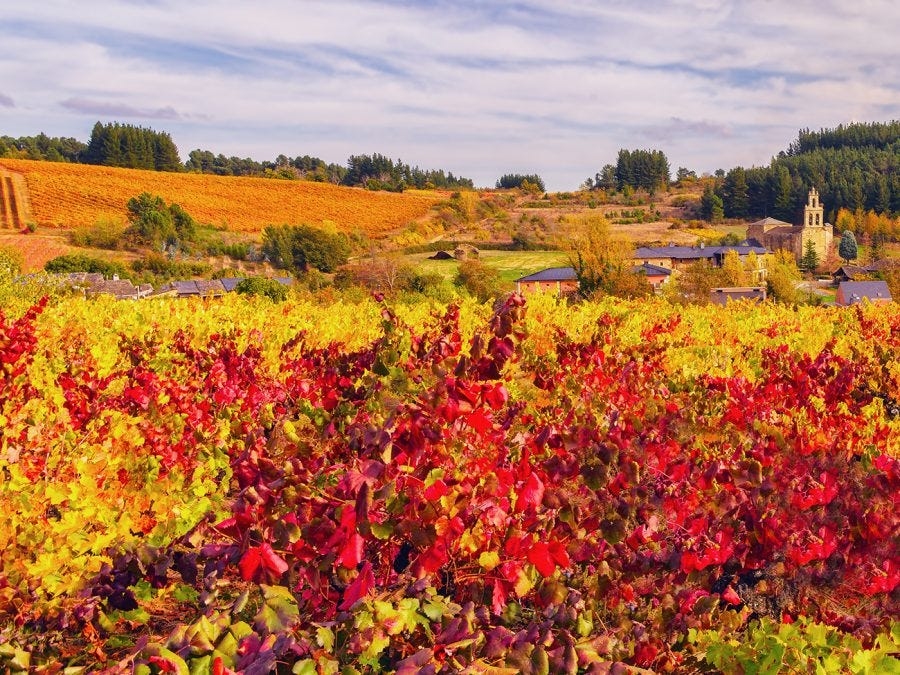 Vignoble espagnol en automne