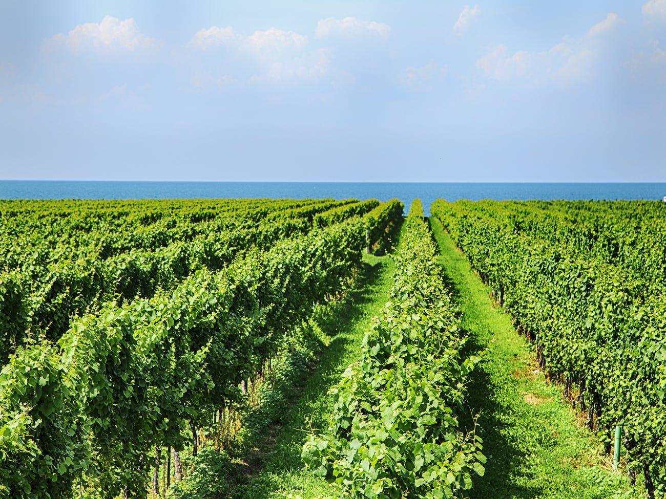 Ontario wine