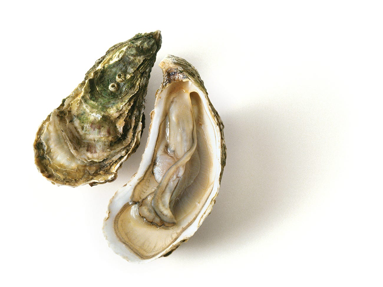 Wine and Oyster Pairings