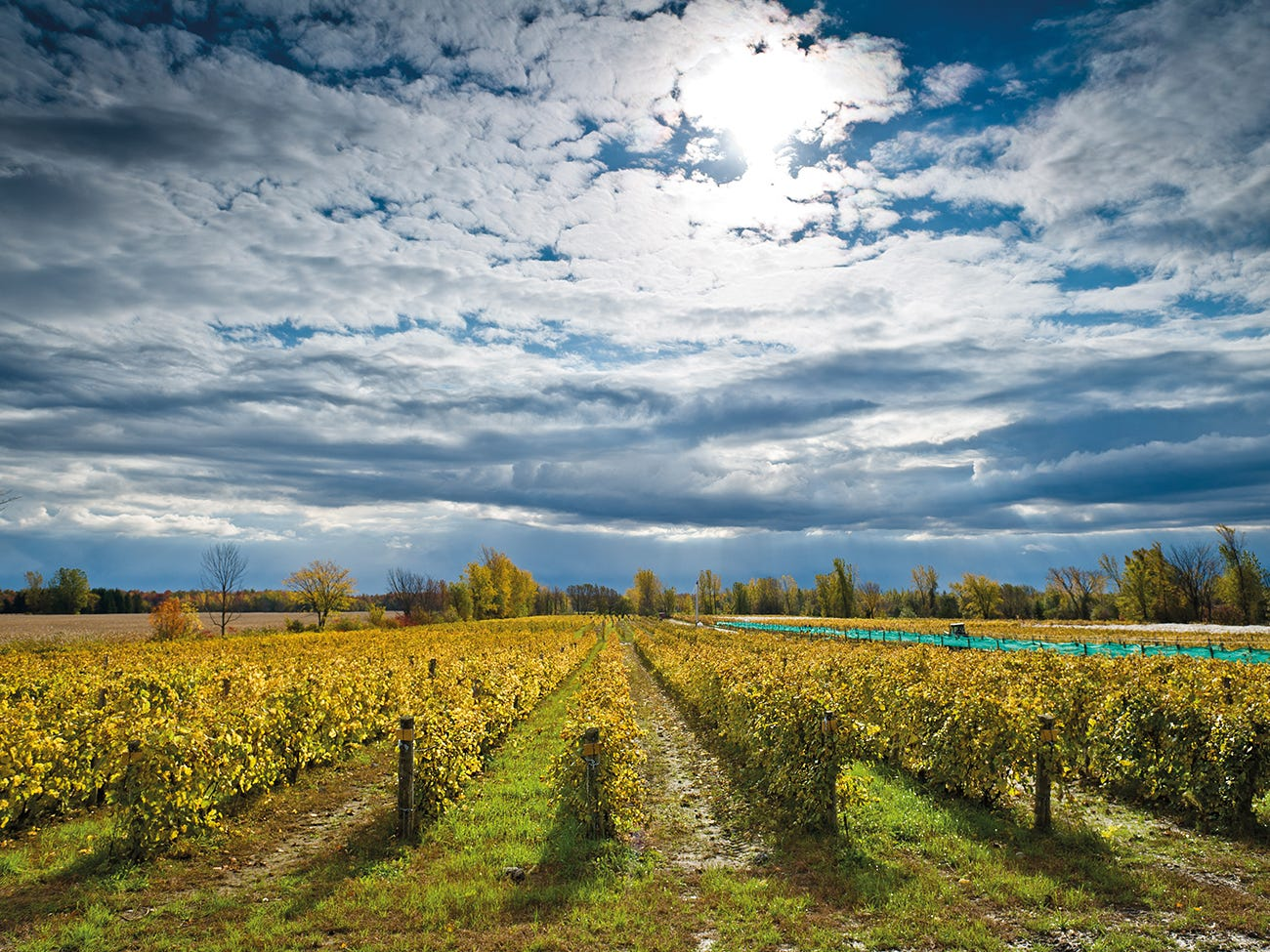 Vignoble du Domaine St-Jacques