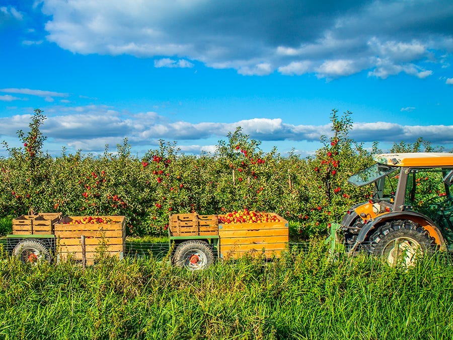 Tractor in an orchard