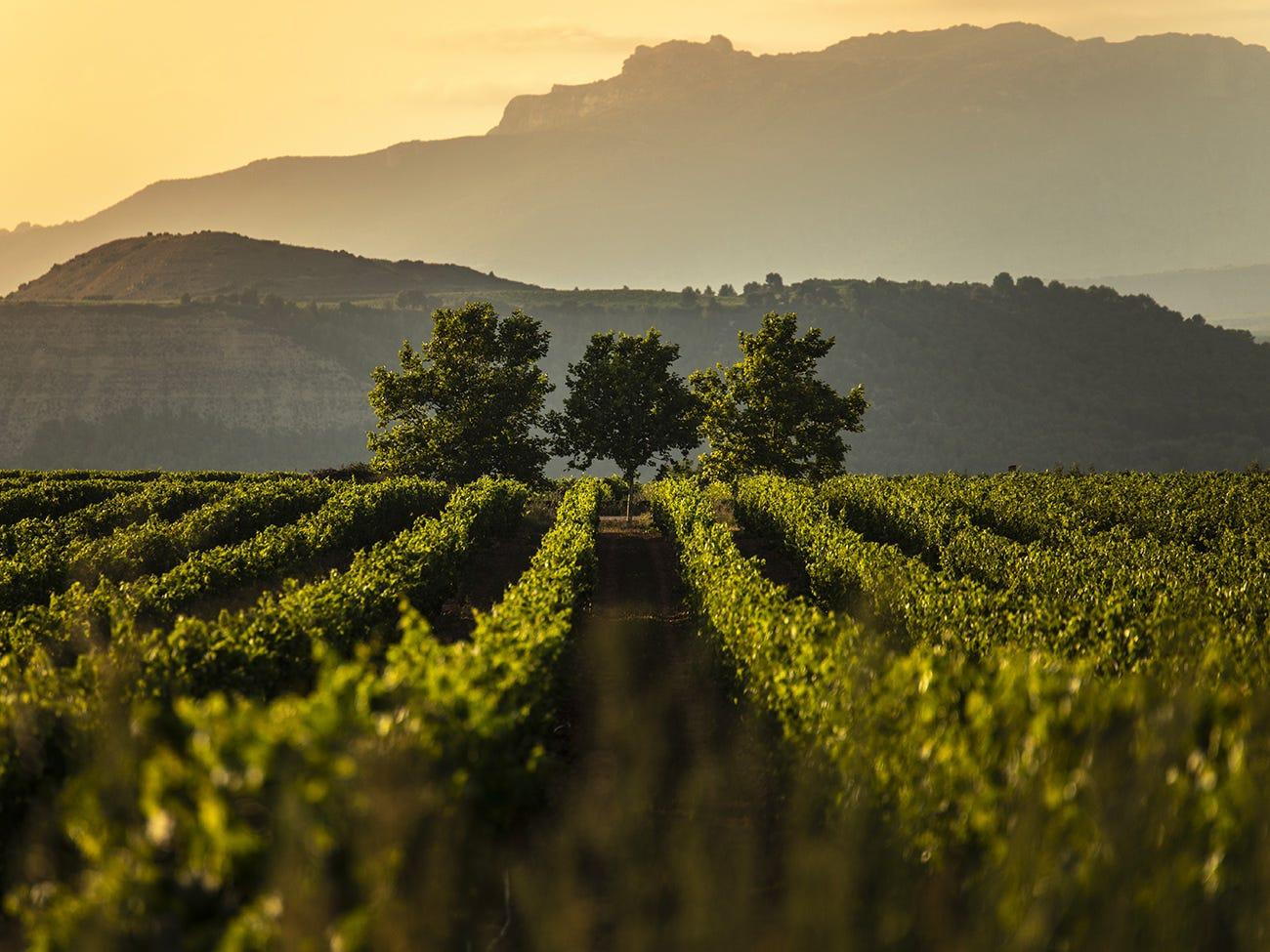 Art de vivre à l'espagnole : la Rioja à l'honneur