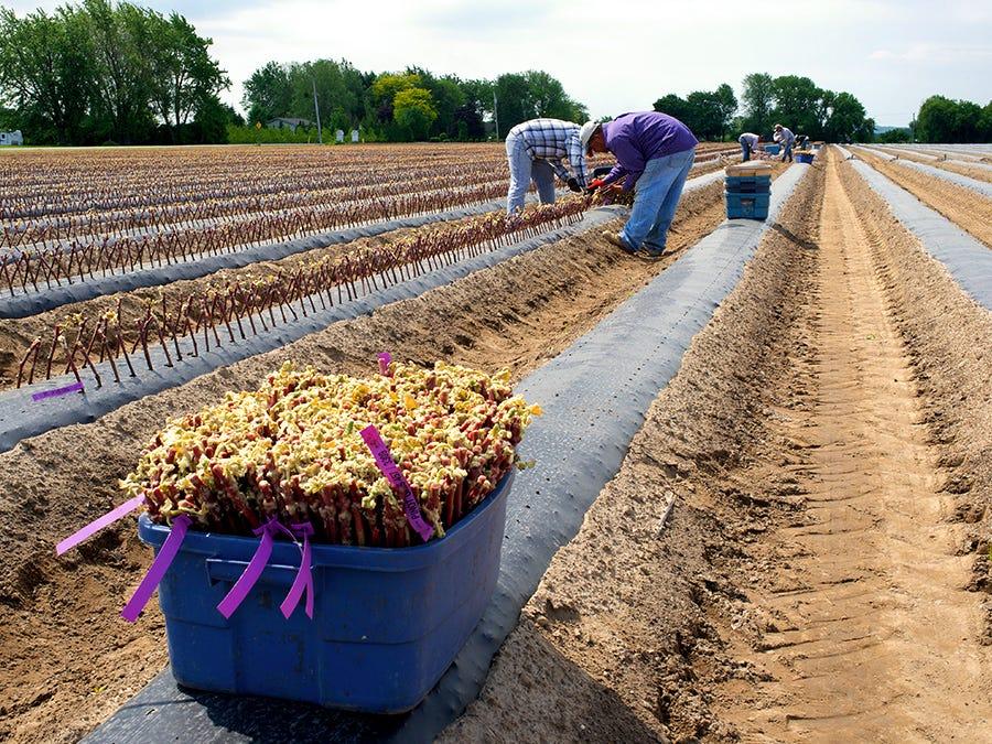 Vineyard, seasonal workers