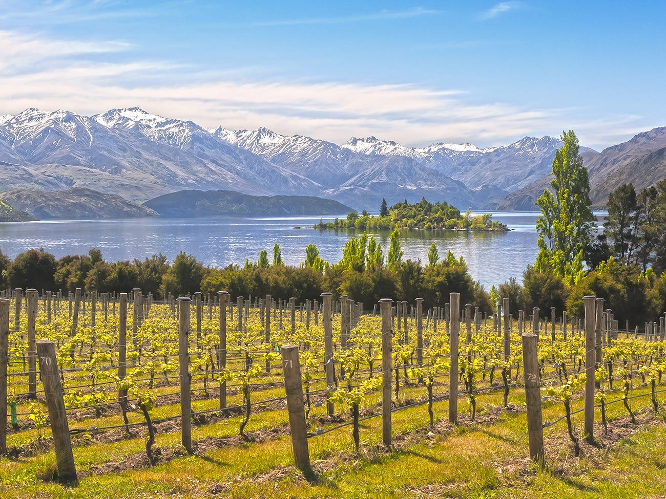 Vignoble en Nouvelle-Zélande