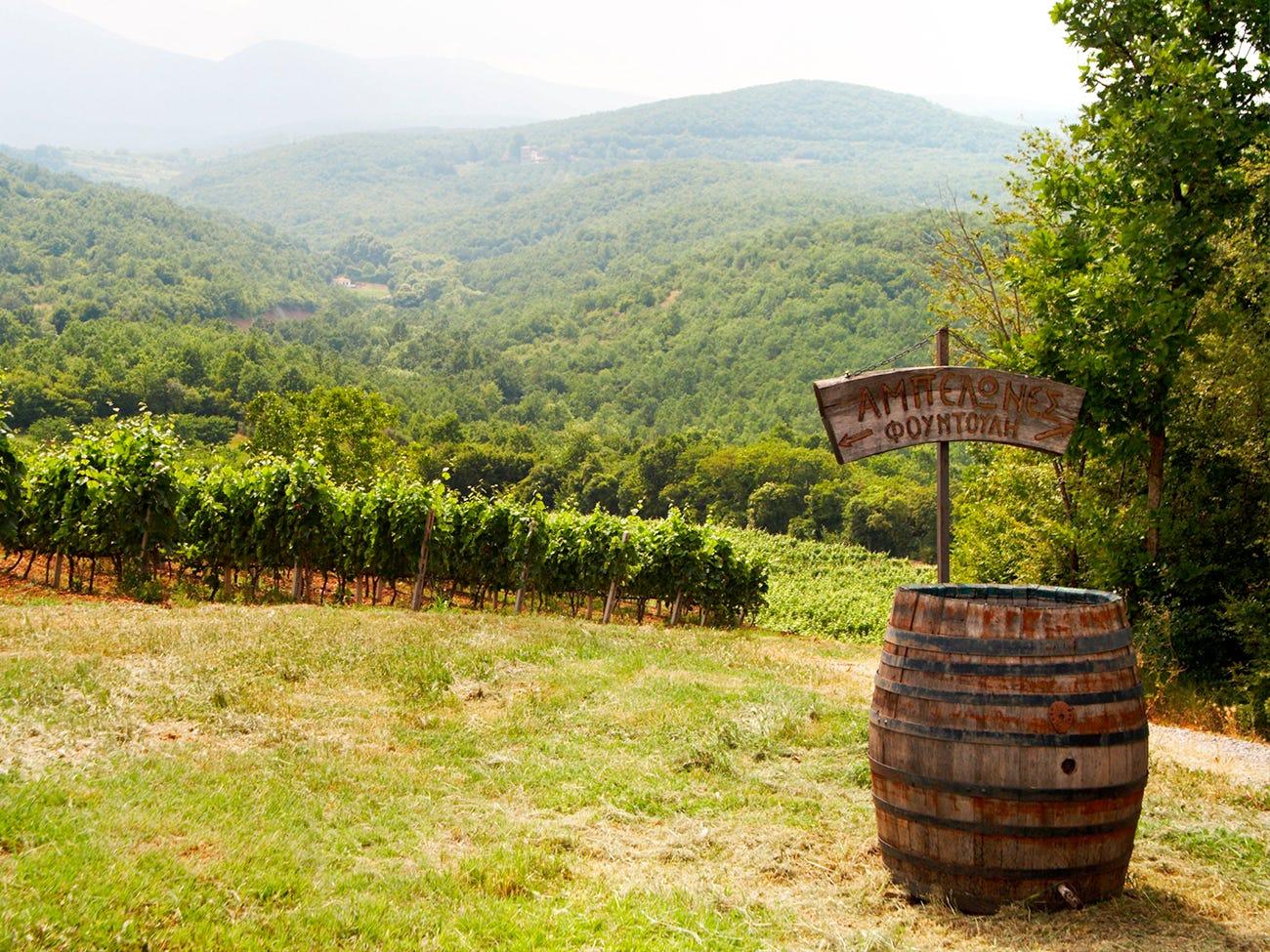Vignoble en région montagneuse
